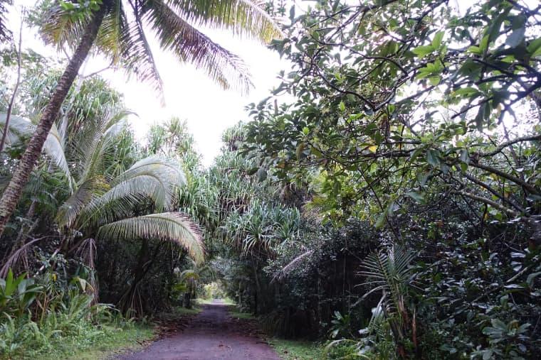 ケイコフォレストさんの家はプナのジャングルの中