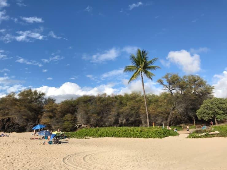 ハプナビーチのパームツリー