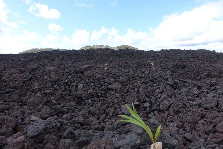 溶岩に登った時の景色1