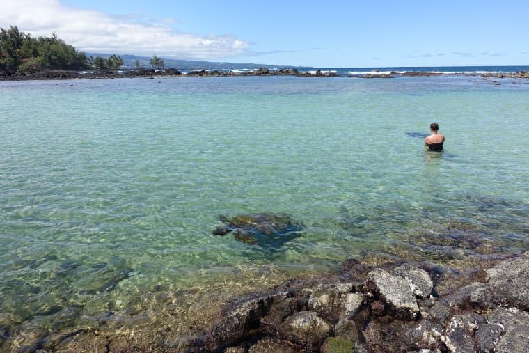 カールスミスビーチにはたくさんのウミガメ