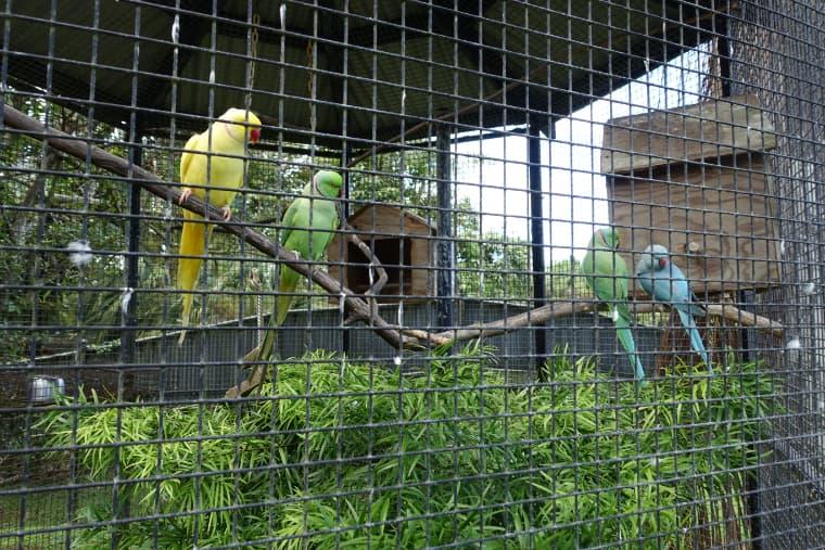 南国っぽい鳥たち
