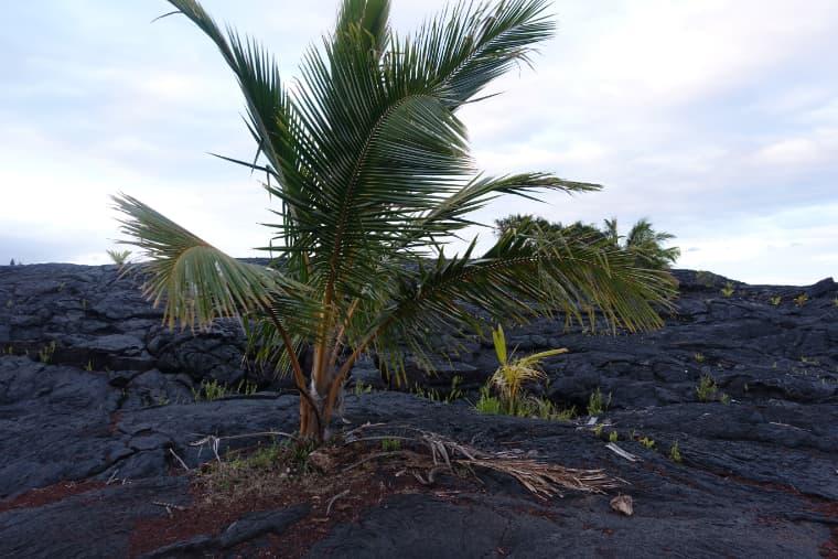 カラパナの溶岩ビーチ