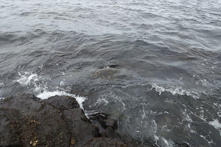 プナルウ黒砂海岸で見たシータートル