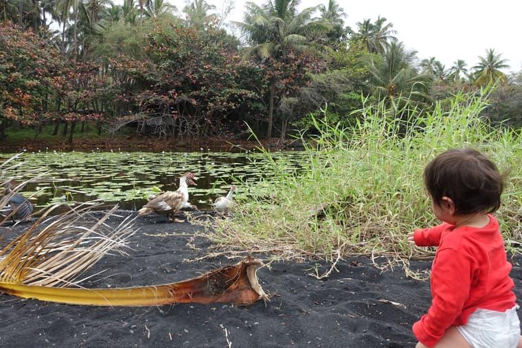 横の池にはアヒル